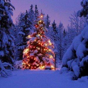 Albero Natale notturno